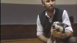 Rules For Mouthing - Sirius Puppy Training Classic