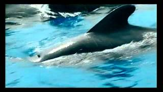 Тенерифе (наслаждения в любое время года)(Канарские острова - элитный мировой курорт, мировое наследие ЮНЕСКО уникальная природа, одна из лучших..., 2012-03-10T10:37:10.000Z)