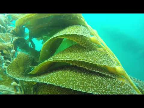 Our Kelp Dive - San Diego, CA (Aug 2017)