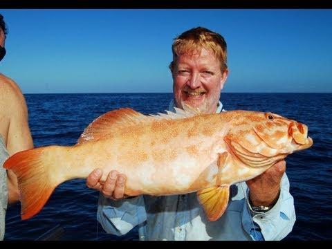 Great Barrier Reef Fishing Charter With Reefari!!