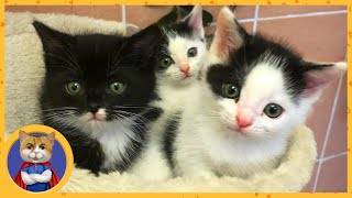 Раздаем спасенных котят в добрые руки. Часть 2. Как котята живут у новых хозяев