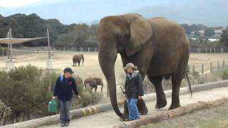 elephant helps deliver breakfast at Salinas B&B