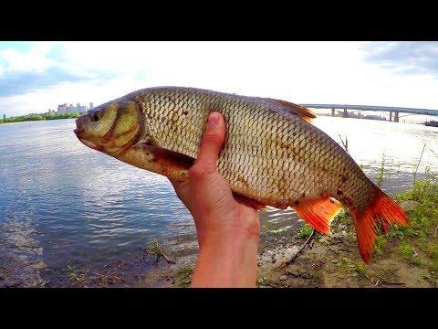 Отличная рыбалка в центре Новосибирска! Жор ЯЗЯ!!! Открытие сезона 2019.