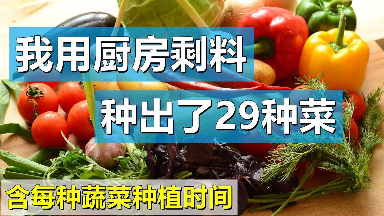 我用厨房剩料种出了29种蔬菜, 含每种菜种植最佳时间, 不用买种子, 蔬菜再生