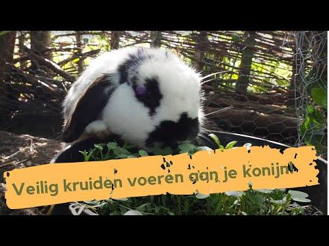 Kruiden voor konijnen