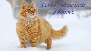 Коты на зимней рыбалке Часть 1 Смешные котики Cats on winter fishing Part 1 Funny cats