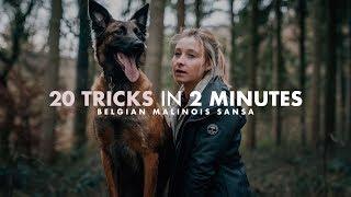 Malinois Training | 20 Kommandos in 2 Minuten