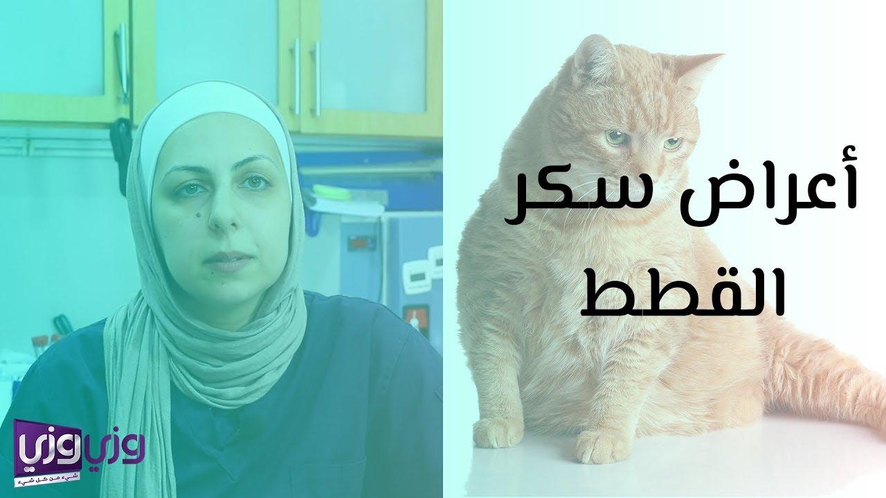 أعراض سكر القطط ومضاعفاتها