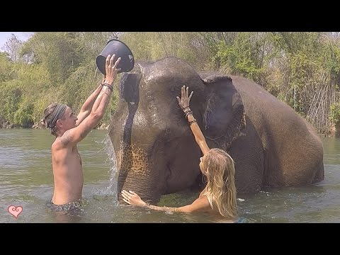 Be The Change You Want To See In The World ♥ Elephant Haven (Elephant Nature Park)