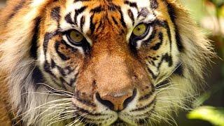 10年以内に絶滅するかもしれない10種の動物