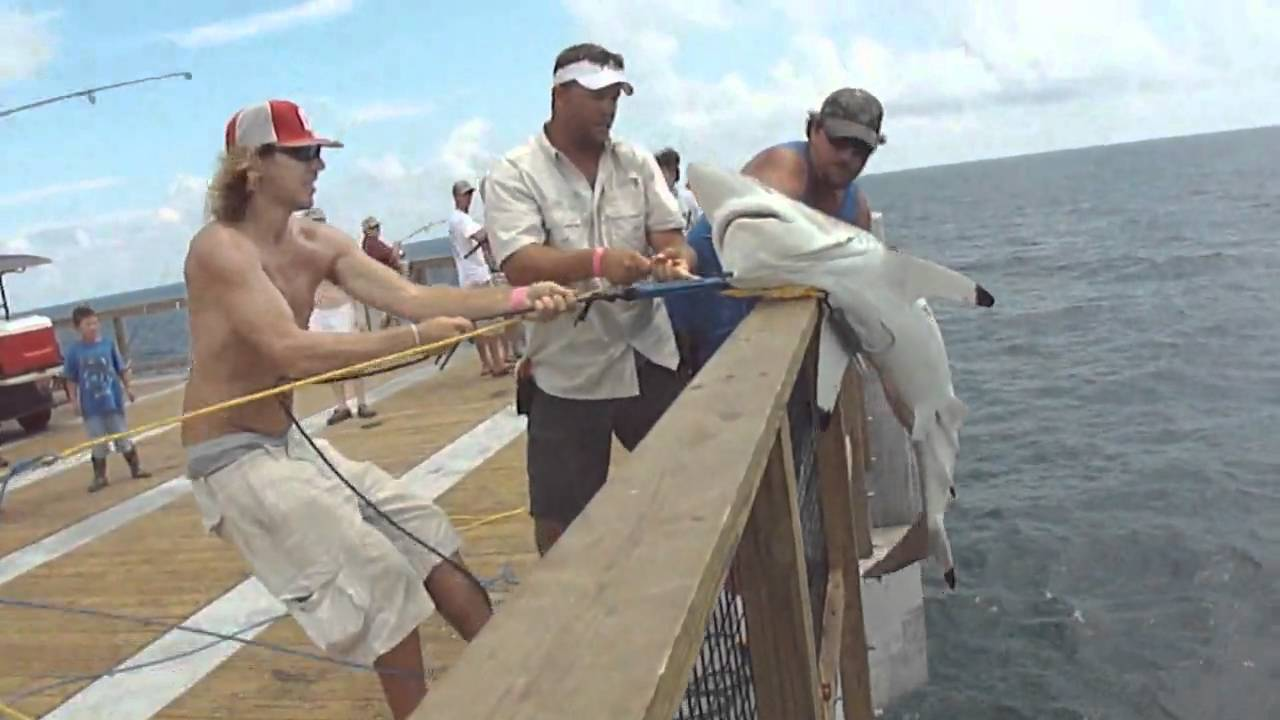 Blacktip shark navarre beach fishing pier 8 18 10 youtube for Shark fishing gear for beach