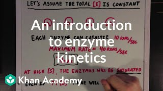 An introduction to enzyme kinetics | Chemical Processes | MCAT | Khan Academy