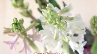 видео Как фотографировать цветы