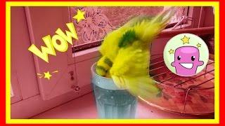 Влог: 💦Купание волнистого попугя🐤Водные процедуры💦  #Птицы
