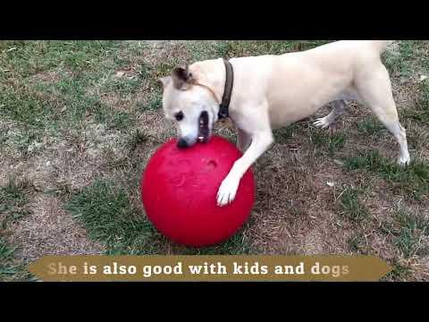 Adopt Lady ~ Canine Adoption & Rescue League