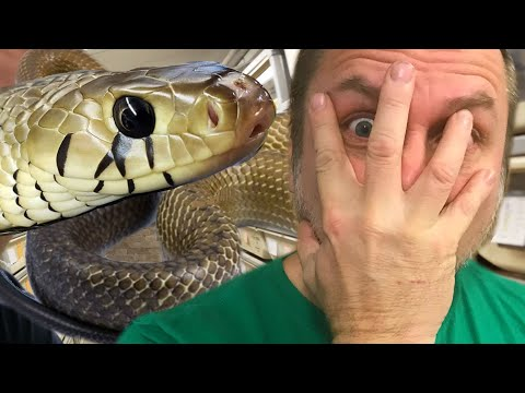 collecting-snake-eggs-gone-wrong!!-|-brian-barczyk
