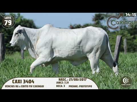 LOTE 79   CAXI 3404