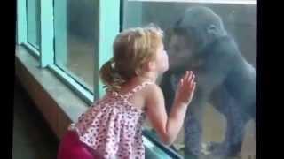 Приколы с животными за стеклом (((3 зоопарк.