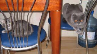 Кошачьи разборки....