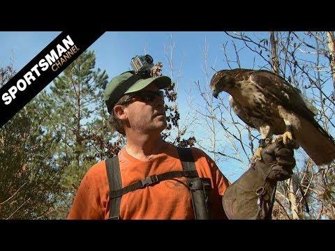 Falconry: Hunting Rabbits Part 2