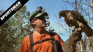 Falconry: Hunting Rabbits Part 2