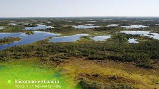 Без комментариев  Васюганские болота  Выпуск 1