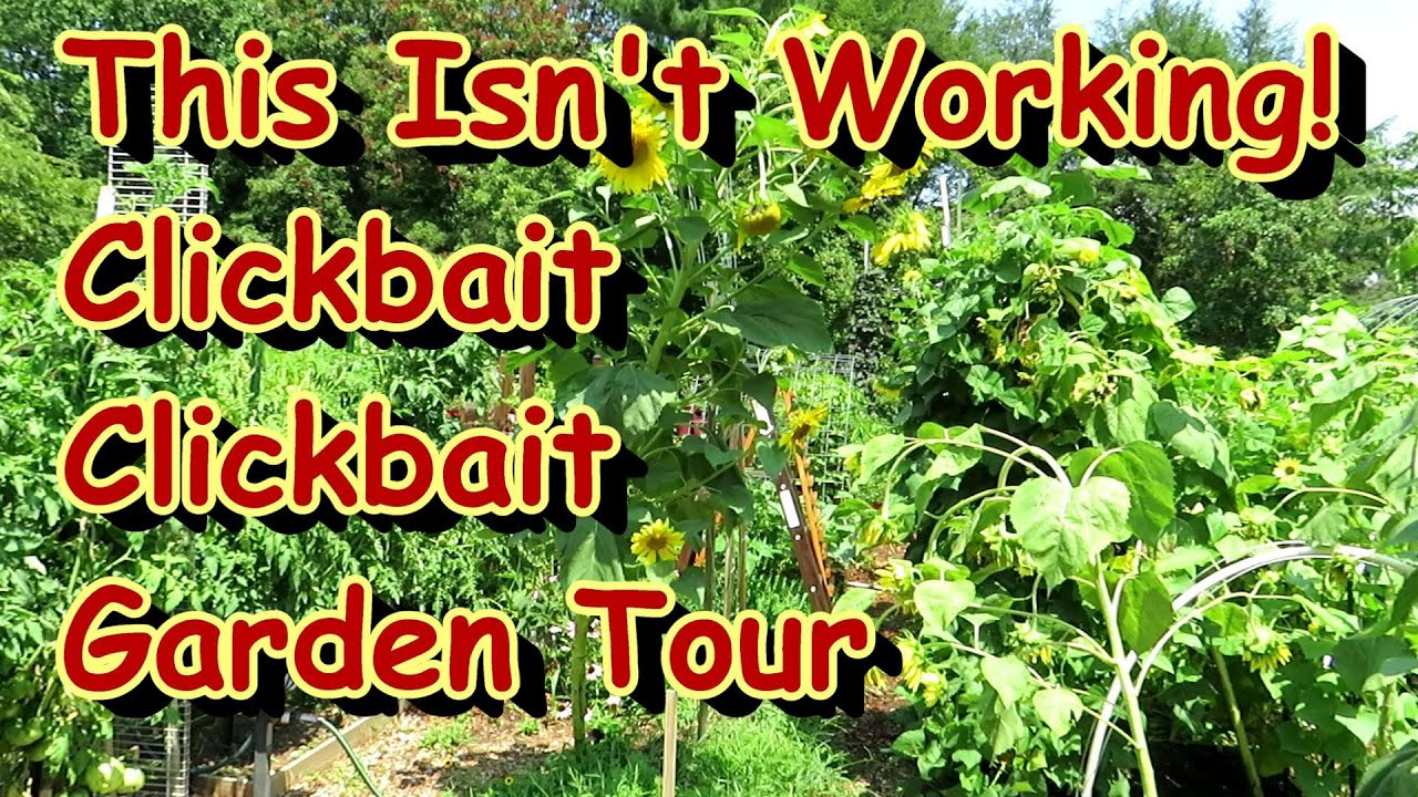 Just a Quick 5 Minute Vegetable Garden Tour in Late July: The 'Clickbait' Garden Tour Series