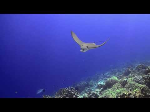 Diving The Banda Sea Wonderland , Nov 2017, HD 720P (16:9 Format)