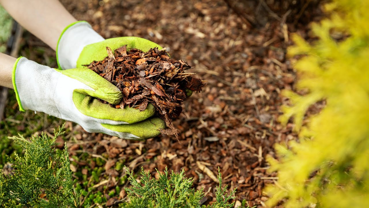 Save Time And Get Results With Proven Garden Mulch Ideas Youtube