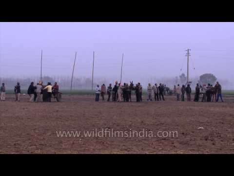 Indian villagers compete in a horse cart race: Kila Raipur