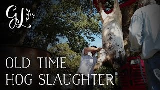Repeat youtube video Slaughter and butcher a pig. Part 2