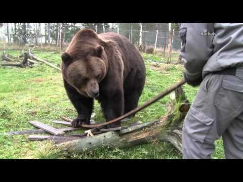 Juuso karhu polttopuun teossa