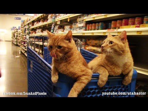 Cats Trained Off Leash Visit #PetSmart with Bonus Scene at H
