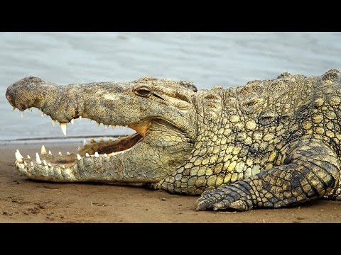 Facing The Jaws Of Death: Surviving A Crocodile Attack - HD Documentary