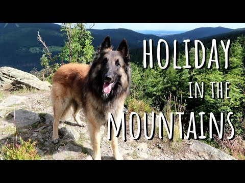 Dog Holiday in the Mountains | Belgian Shepherd Tervuren