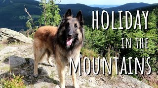 Vacaciones con mi perro en las montañas   Pastor Belga Tervueren