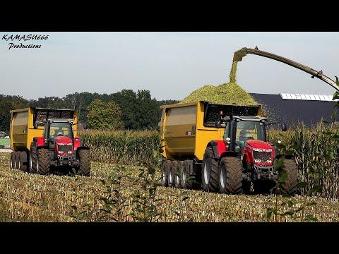 Mais 2019 : Van Bakel / USA / Massey Ferguson / Claas Jaguar 970 / Big harvest / Mais ernte