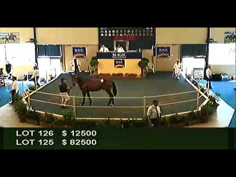 2012 Adelaide Yearling Sales Session 1