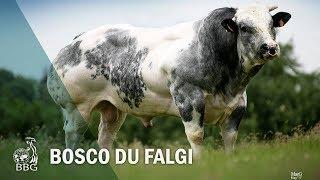 BOSCO DU FALGI - Portes ouvertes BBG 2017