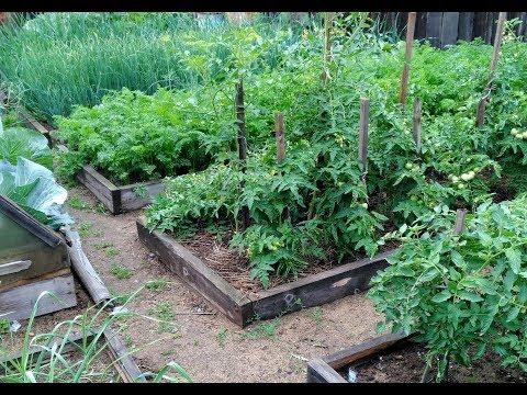 Мой огород. 9