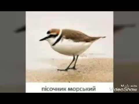 Красная книга Украины птици