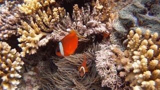 Trip to Mana Island, Fiji
