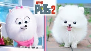 The Secret Life Of Pets 2 IN REAL LIFE!!!