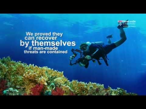 Newcastle University - Protecting coral reefs