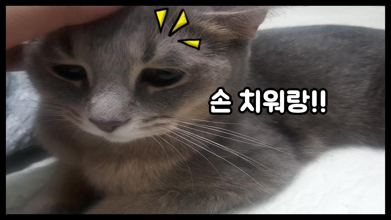 고양이】 아비시니안 고양이의 심기를 건드리면 안됩니다.. (Cat and Daily routine) - YouTube