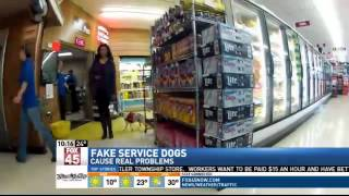 TONIGHT AT 11: Fake Service Dogs Cause Probl
