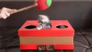 Kitten Whac-A-Mole