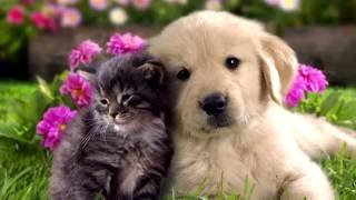 ТОП-5 домашних животных которых мы любим!!!