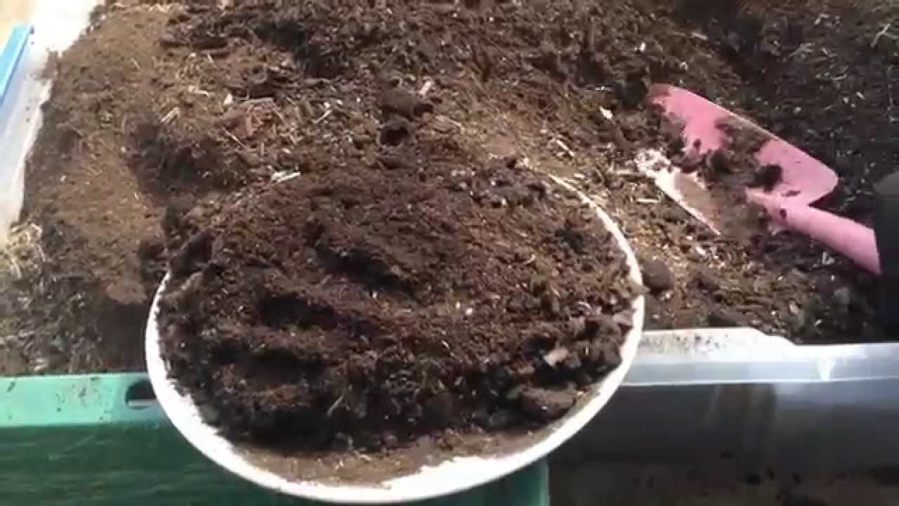 カブトムシ 幼虫 腐葉土