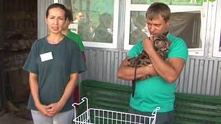Канадская пума Парма принесла шестнадцатого котенка за семь лет